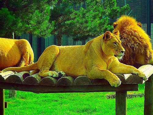 Зоопарк Бурсы
