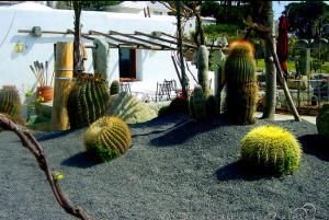 сад кактусов «Джардини Равино»